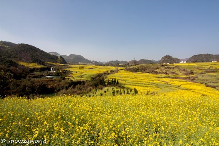 Yunnan2017-0079