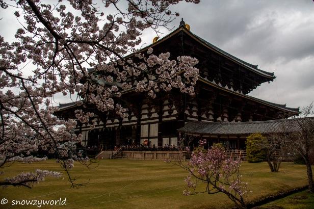 Japan17-0369