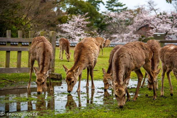Japan17-0376