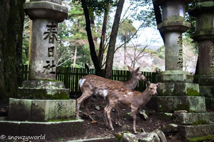 Japan17-0389