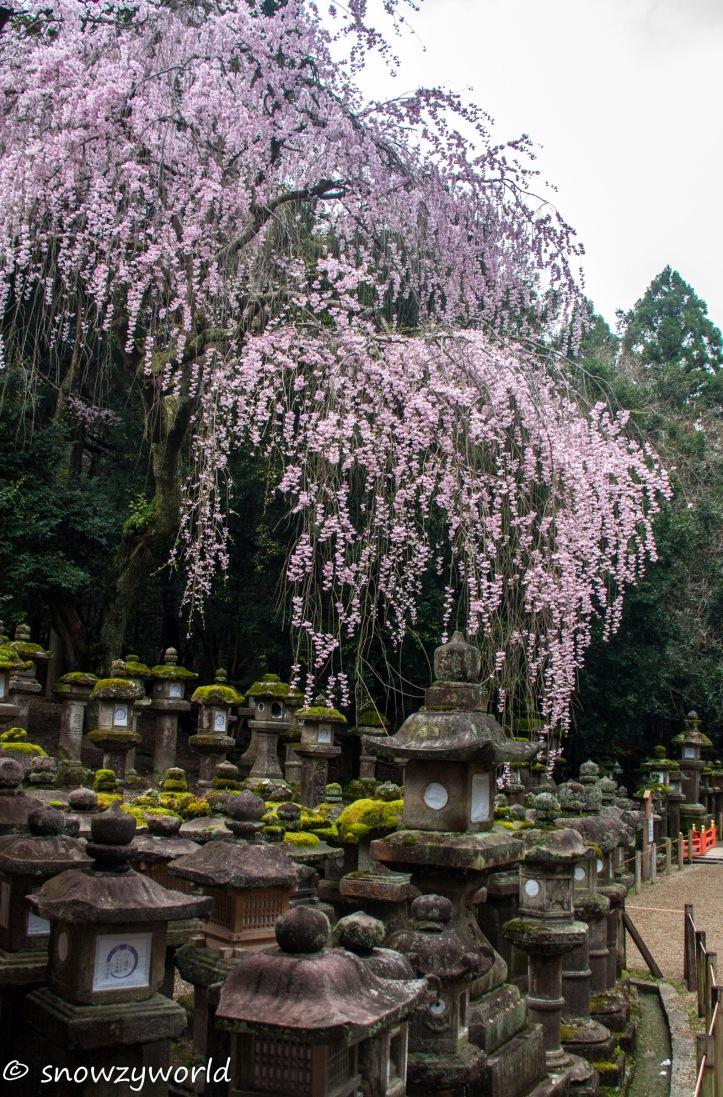 Japan17-0398